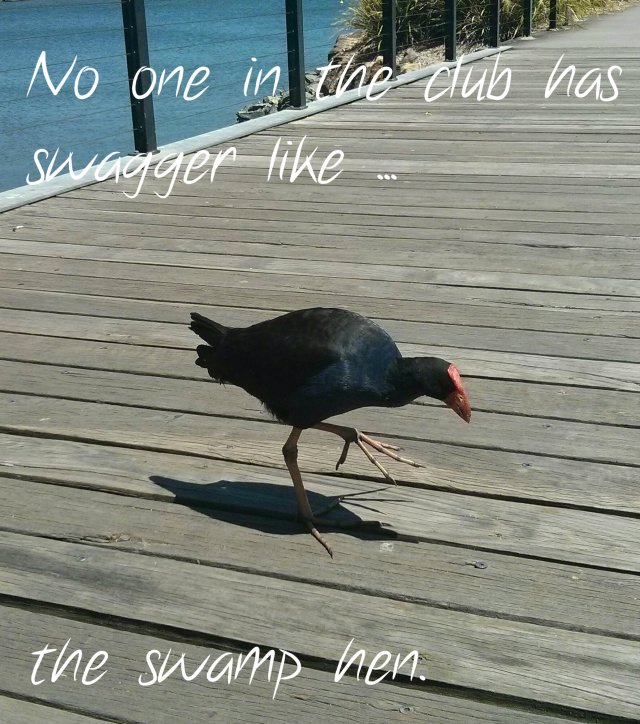 swamp hen swagger