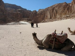 "In the Sinai desert on a ""camel safari"" with some Bedouin dudes"
