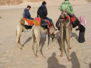 More camel time